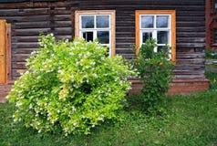 Blühender Busch nahe Wand des hölzernen Gebäudes Lizenzfreie Stockfotos