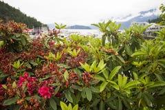Blühender Bush mit Hafen im Hintergrund Stockfotos