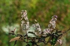 Blühender dekorativer Apfelbaum mit Gleiskettenfahrzeug Stockfotos
