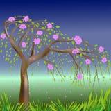 Blühender Frühlingsbaum Stockbild