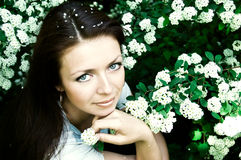 In blühender Frühlingsblüte Stockfoto