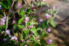Blühender Frühlingsgarten Lizenzfreies Stockfoto