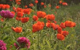 Blühender Garten Lizenzfreies Stockfoto