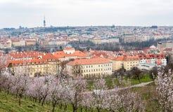Blühender Garten, Apfelbaum, Stadtbild in Prag, tschechisch Gestalten Sie, Stadtbild mit alter Stadt, Fernsehturm landschaftlich Lizenzfreies Stockfoto
