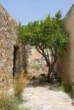 Blühender grüner Baum, der auf schmaler Straße wächst Stockfotografie