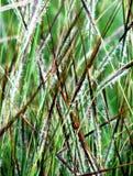Blühender Graszusammenfassungshintergrund Stockbild