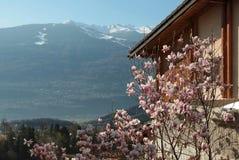 Blühender Kirschbaum in Sion, die Schweiz lizenzfreie stockfotos