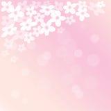 Blühender Kirschbaumhintergrund des Frühlinges Lizenzfreies Stockfoto