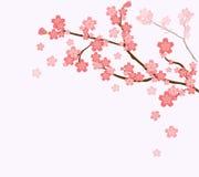Blühender Kirschbaumniederlassungshintergrund lizenzfreie abbildung