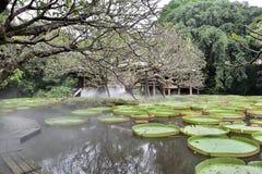 Blühender Lotos, der auf einen Lotosteich schwimmt Stockfotografie