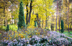 Blühender Park des Herbstes Stockfoto