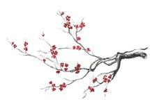 Blühender Sakura-Zweig Stockfoto
