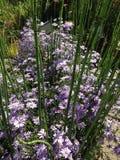 Blühender Strauch und Bambus Lizenzfreie Stockfotos