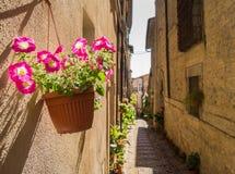 Blühender Topf im romanischen Dorf Lizenzfreie Stockfotos