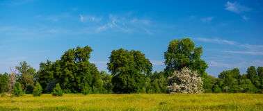 Blühender Weißdorn Stockbild