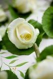 Blühender Weißroseabschluß oben Lizenzfreies Stockfoto