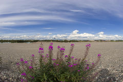 Blühender Weidentee auf einem Hintergrund des blauen Himmels mit Wolken Lizenzfreie Stockfotografie