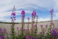 Blühender Weidentee auf einem Hintergrund des blauen Himmels mit Wolken Lizenzfreie Stockbilder