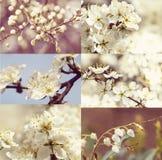 Blühender Weinlesesatz des Baums im Frühjahr - Stockbild