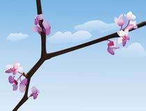 Blühender Zweig lizenzfreie abbildung