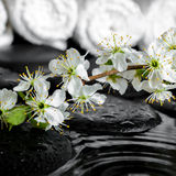 Blühender Zweig der Pflaume, weiße Tücher auf Zensteinen mit Kräuselung bezüglich Stockbilder