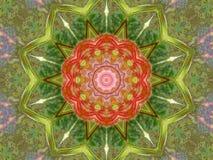 Blühendes Ahorn-Kaleidoskop Stockfotos