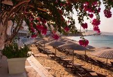 Blühendes Bouganvilla auf dem Strand mit Regenschirm Lizenzfreies Stockfoto