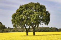 Blühendes Feld stockfotografie