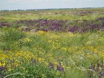 Blühendes Feld mit bunten Blumen Stockfotografie