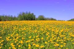 Blühendes Feld, Russland stockbilder