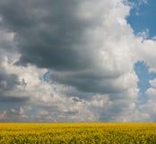Blühendes Feld und der Himmel Lizenzfreie Stockfotos