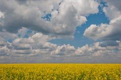Blühendes Feld und der Himmel Stockbild
