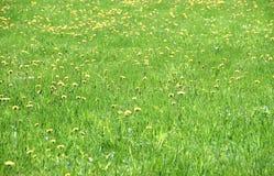 Blühendes grünes Feld Stockbild