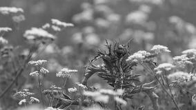 Blühendes Gras auf einer Sommerwiese Sommerlandschaft - buntes Gras auf einer Wiese an einem Sommertag stock footage