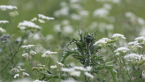 Blühendes Gras auf einer Sommerwiese Sommerlandschaft - buntes Gras auf einer Wiese an einem Sommertag stock video footage