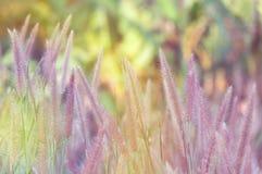 Blühendes Gras in der Natur Stockbilder