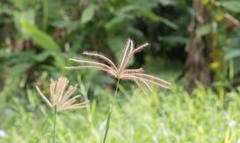 Blühendes Gras im Sonnenlicht draußen Lizenzfreies Stockfoto