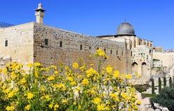 Blühendes Jerusalem, Israel lizenzfreies stockbild