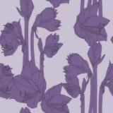 Blühendes nahtloses Muster Blumen Hippeastrum lilly Dunkle violette Linie Blumen stock abbildung