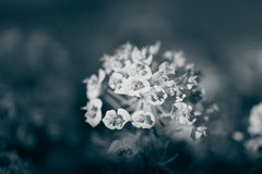 Blühendes Pflänzchen auf natürlichem unscharfem Hintergrund Flacher dep Lizenzfreies Stockfoto