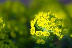 Blühendes Pflänzchen auf natürlichem unscharfem Hintergrund Flacher dep Stockfotos