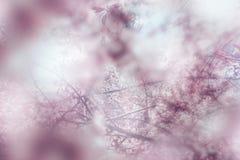 Blühendes unscharfes Detail des Apfelbaums des Frühlinges Lizenzfreies Stockfoto
