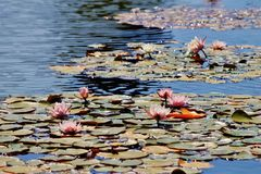 Blühendes Wasser Lizenzfreie Stockbilder