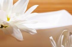 Blüht Badekurort Stockbilder