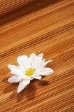 Blüht Badekurort stockbild