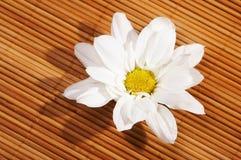 Blüht Badekurort lizenzfreies stockbild