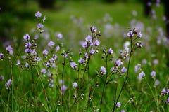 Blüht Baumregenwald Lizenzfreie Stockbilder