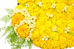 Blüht Behälter Stockfotografie