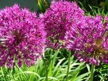 Blüht Biene Stockbilder