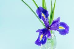 Blüht blaue purpurrote Iris mit Blättern, Draufsicht des Glasvase Stockbild